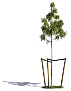 small willow tree with crate