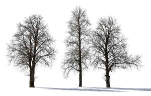 group of backlit bare trees