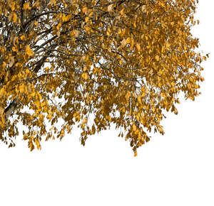 branch of a tree with golden fall leaves