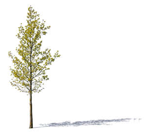 small tree with small sprouting leaves