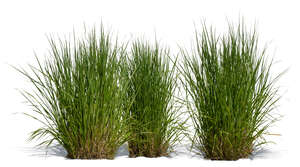 three cut out decorative grass tufts