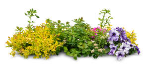 cut out flowerbed with different plants