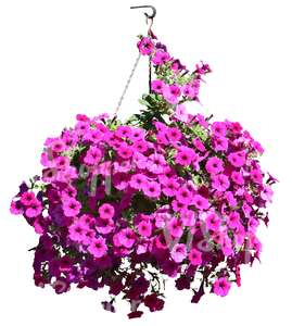 hanging basket with pink flowers