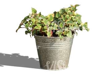 small plant in a decorative bucket