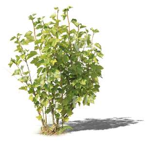 cut out small regular bush