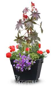 combination of flowers in a black pot
