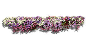 Cut out row of blooming flowers