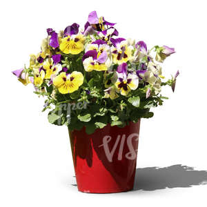 cut out pansy in a red pot