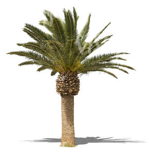 cut out small palm tree