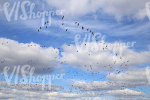 cloudy daytime sky with a flock of birds