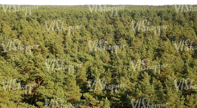 cut out forest background seen from above