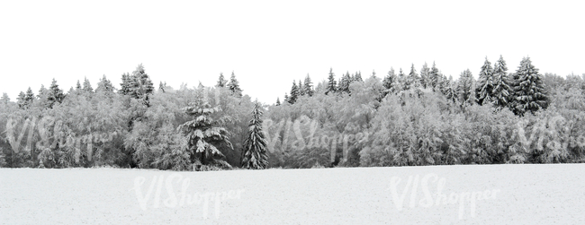 cut out background with a snowy forest