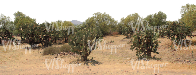 cut out background with an arid wilderness and cactuses