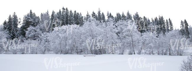 cut out background with snow covered forest