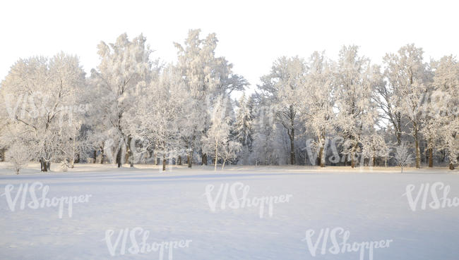 cut out background with snow covered trees