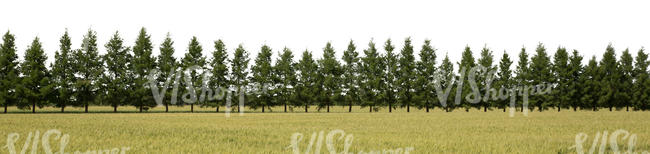 cut out background with a row of firs