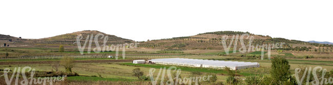 cut out background with small mountains and olive groves