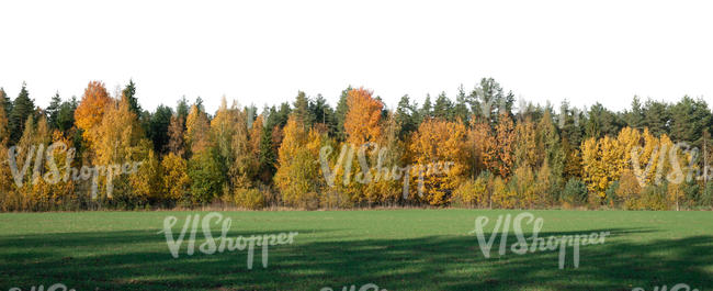 cut out background with forest in autumn