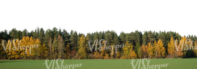 forest background in autumn