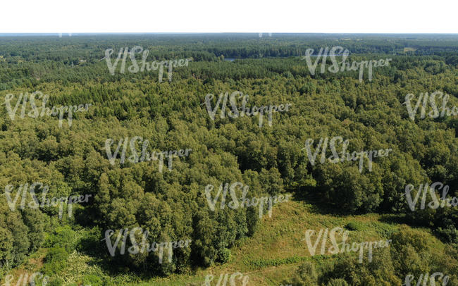 above view of forests