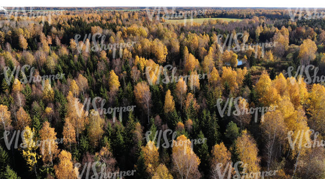 bird-eye view of a forest in autumn