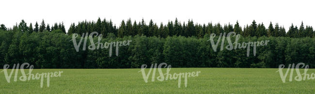 field with a forest in the background