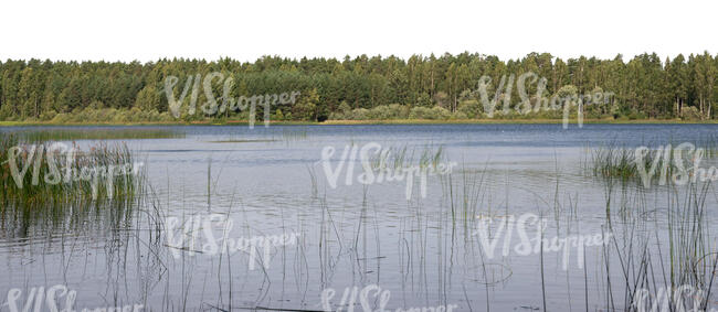 background with lake and forest