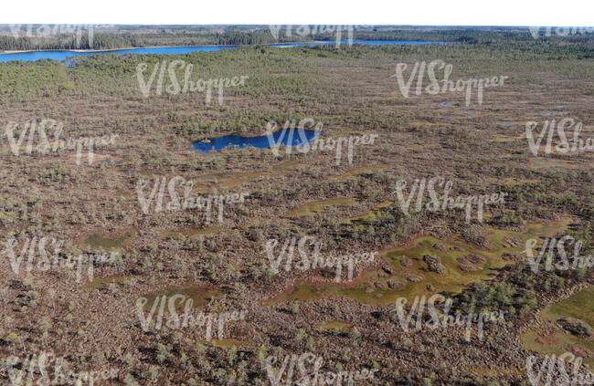 wild bog shot from above