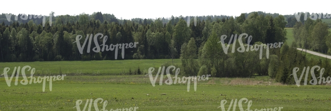 cut out background with a forest and field