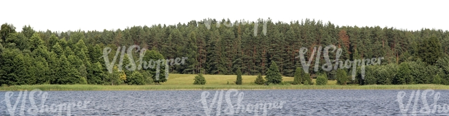 cut out background with a lake and spruce forest