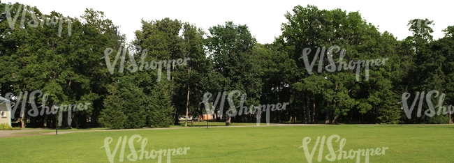 view on a park with tall trees