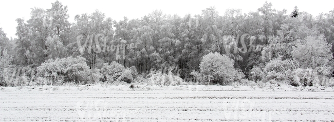 field of snow with a trees in the background