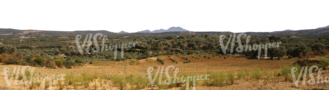 cut out background with olive groves and hills