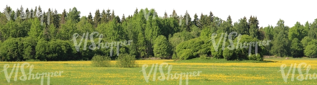 meadow with flowers and forest in the back
