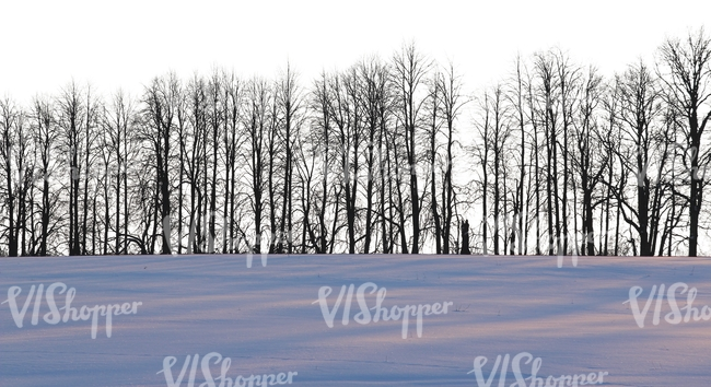 row of bare trees in wintertime