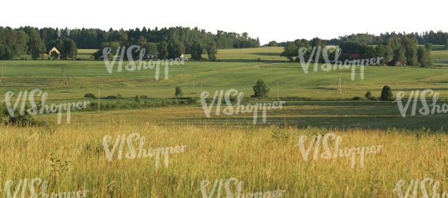 rural landscape with meadow and trees