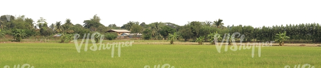 tropical rural background