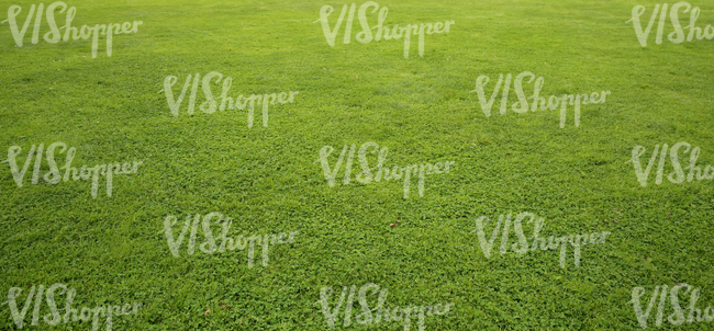 field of short grass