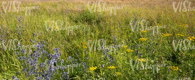 meadow with many different plants and flowers