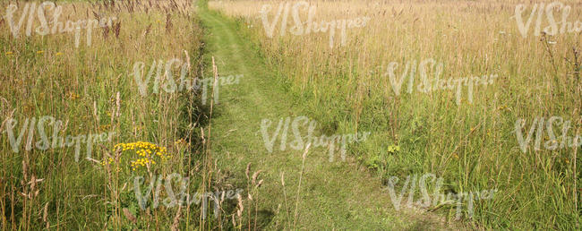 meadow with a mowed path
