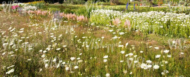 meadow and flowerbeds in plant nursery