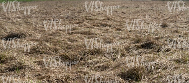 field of tall dry grass
