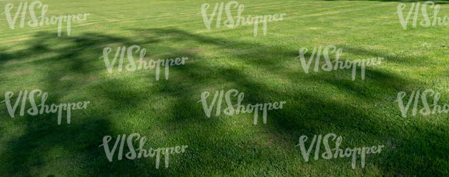 mowed lawn with tree shadows