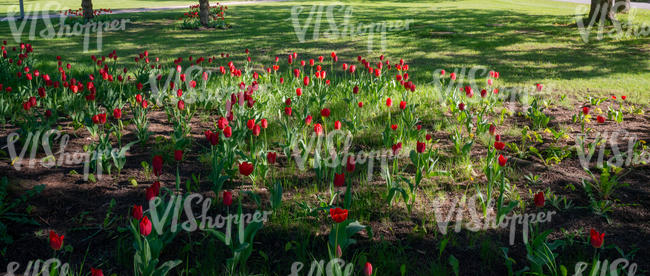 park ground with tulips