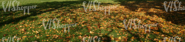 image of ground covered with leaves in autumn