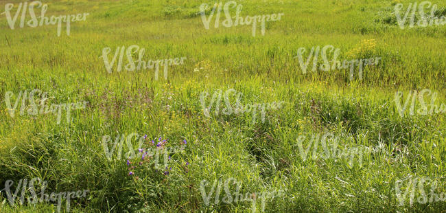 grassland with flowers