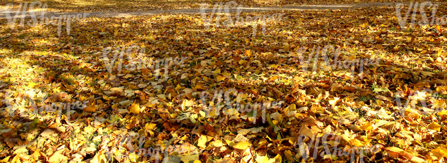 autumn ground covered with leaves