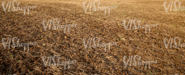 dry field in autumn