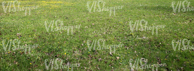 grass field with spring flowers and dry leaves
