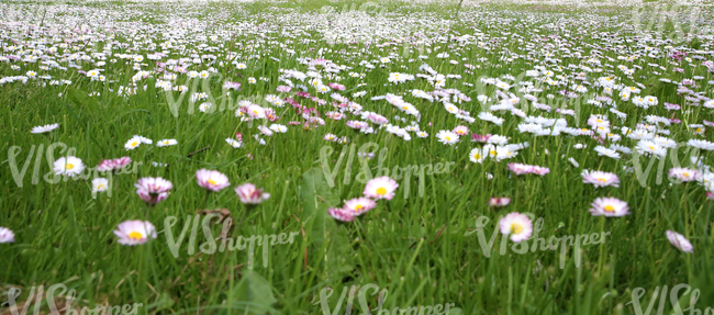 grass field with spring flowers up close